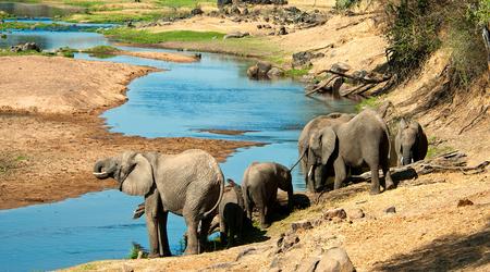 Elephants at Ruaha National Park