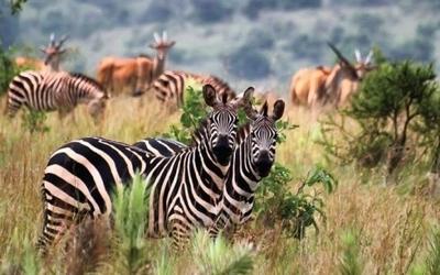 Akagera National Park wildlife