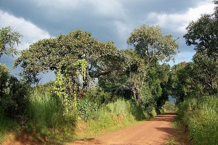 ruvubu national park