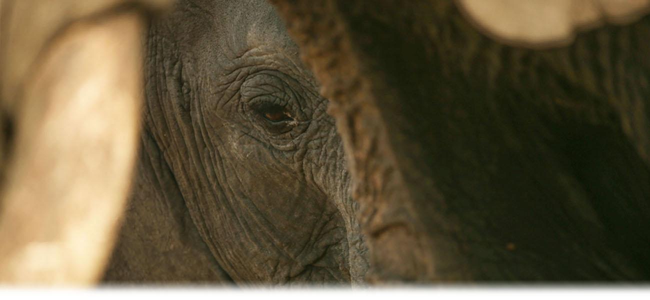 Tanzania Safari Destinations Await