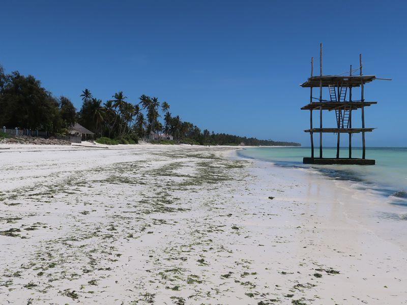 Bwejuu Beach with Algae